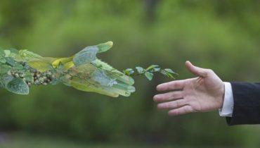 we-are-green-sostenible-networkia